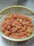 木苺一日の収穫量です。