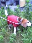 レインコートで雨も快適。